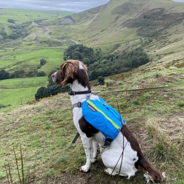 Mountain Dog 5 star review on 7th September 2020