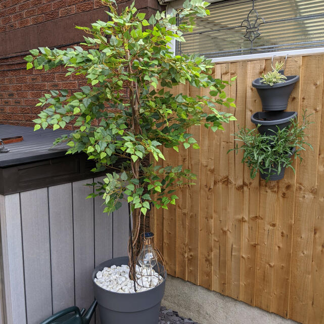 Evergreen Trees & Shrubs 5 star review on 11th July 2021