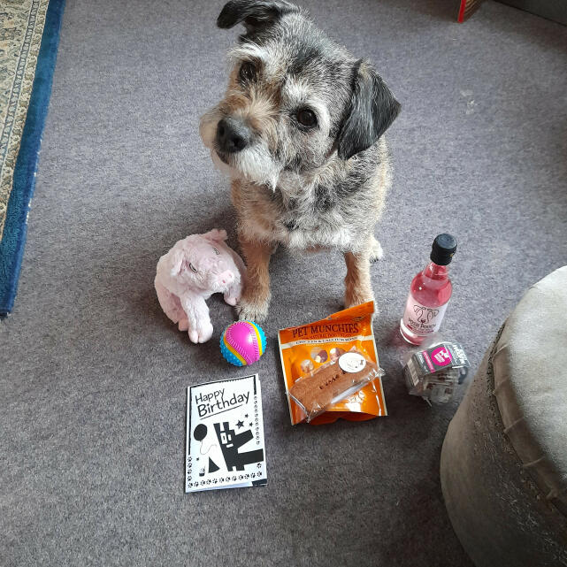Postman Pooch 4 star review on 22nd March 2021