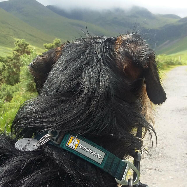 Mountain Dog 5 star review on 30th July 2020