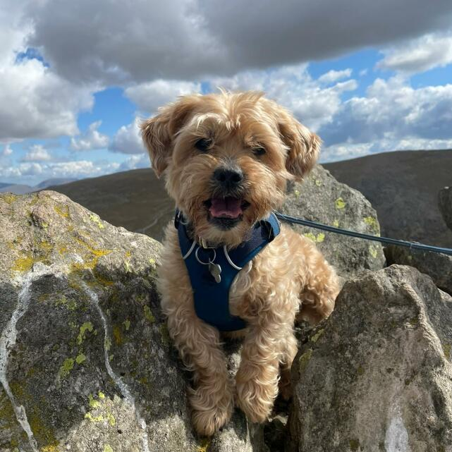 Mountain Dog 5 star review on 8th May 2021
