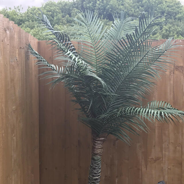 Evergreen Trees & Shrubs 3 star review on 14th May 2020