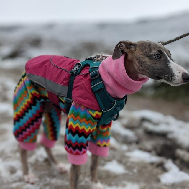 Mountain Dog 5 star review on 28th December 2020