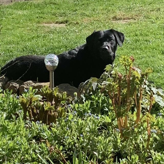 Naturo Natural Pet Food 5 star review on 19th April 2021