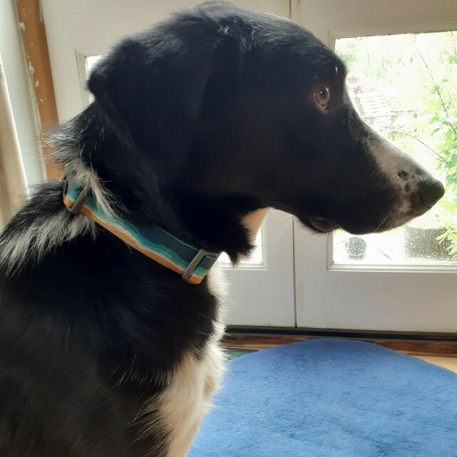 Mountain Dog 5 star review on 23rd May 2021
