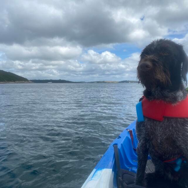 Mountain Dog 5 star review on 10th August 2020
