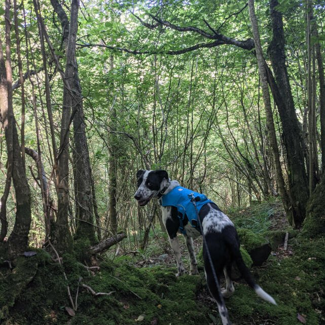 Mountain Dog 5 star review on 20th July 2021