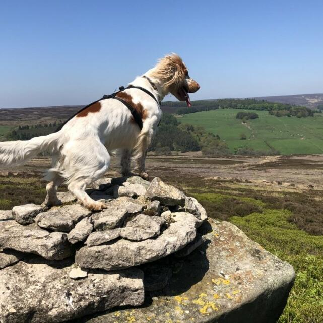 Mountain Dog 5 star review on 2nd June 2021