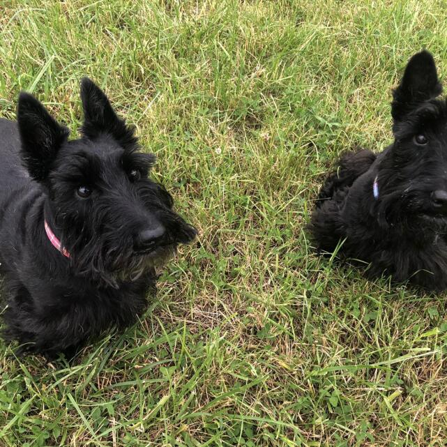 Fish4dogs Ltd 5 star review on 3rd September 2021