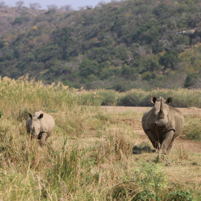 Walks in Africa 5 star review on 11th October 2019