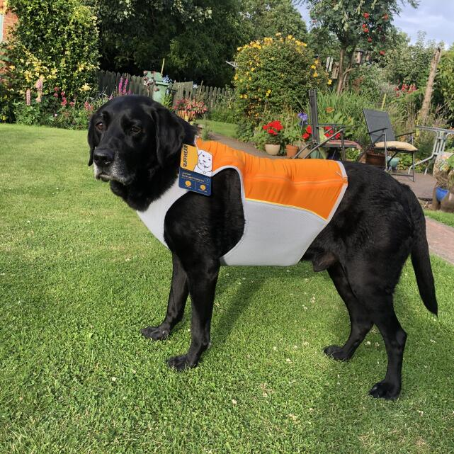 Mountain Dog 5 star review on 1st August 2020
