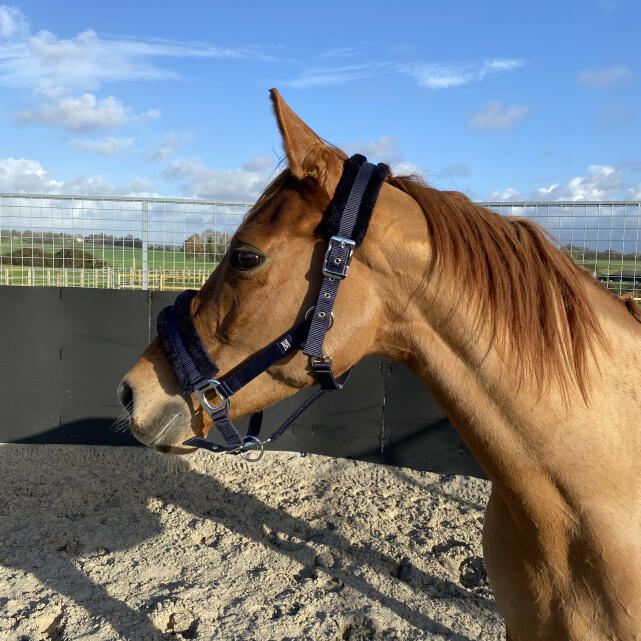 Equestrian Giveaways 5 star review on 21st February 2021
