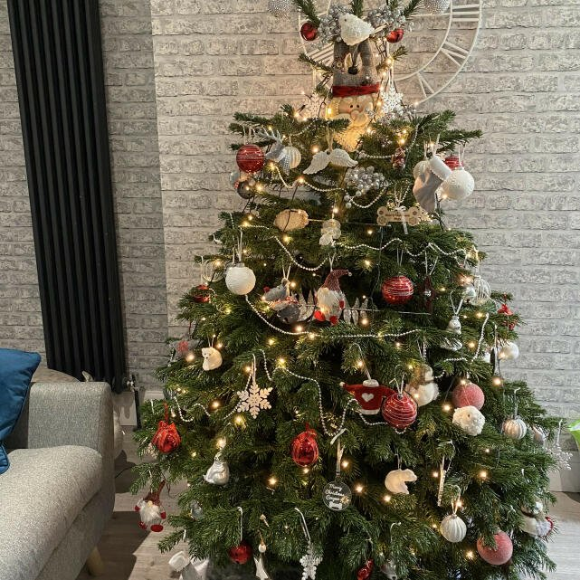 Christmas Trees Liverpool 5 star review on 6th December 2020