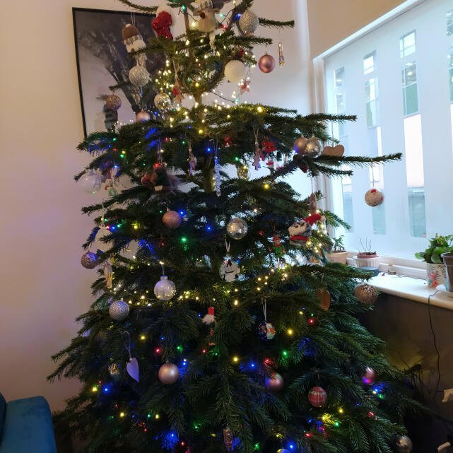 Christmas Trees Liverpool 5 star review on 7th December 2020